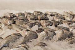Peixes frios frescos no gelo Fotografia de Stock Royalty Free
