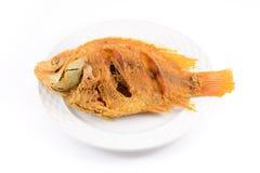 Peixes fritados Fotografia de Stock