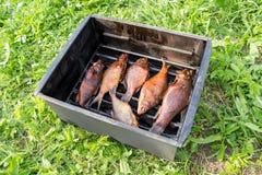 Peixes fumado apetitosos no fumeiro Imagem de Stock Royalty Free