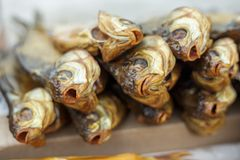 Peixes fumado frios Foco seletivo nas cabeças dos peixes Indústria do marisco Imagens de Stock