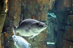 Peixes grandes foto de stock