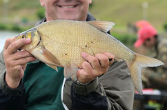 Peixes grandes imagem de stock royalty free