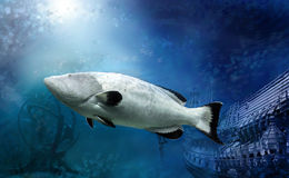 Peixes grandes Imagem de Stock