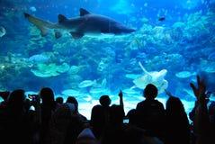 Peixes grandes Foto de Stock Royalty Free