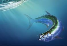 Peixes grandes do tarpão no fundo ilustração stock