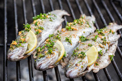 Peixes grelhados com limão e especiarias fotografia de stock royalty free