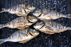 Peixes grelhados no assado fotos de stock