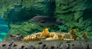 Peixes inferiores de mar Fotografia de Stock