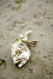 Peixes inoperantes na praia Imagem de Stock