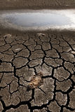 Peixes inoperantes na terra seca Fotografia de Stock