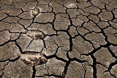 Peixes inoperantes na terra seca Imagem de Stock