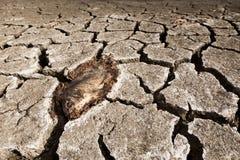 Peixes inoperantes na terra seca fotos de stock royalty free