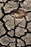 Peixes inoperantes na terra seca Imagem de Stock Royalty Free