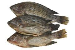 Peixes inteiros do Tilapia Fotografia de Stock