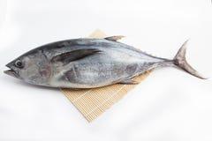 Peixes japoneses frescos no fundo branco fotos de stock