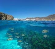 Peixes litorais e plâncton vegetal da vila da Espanha subaquáticos imagens de stock royalty free