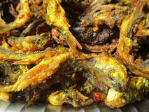 Peixes locais fritados do Nepali Foto de Stock