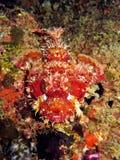Peixes médios Fotos de Stock Royalty Free