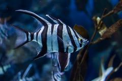 Peixes marinhos Foto de Stock Royalty Free