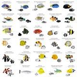 Peixes marinhos Fotos de Stock Royalty Free