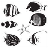 Peixes marinhos Ilustração do Vetor