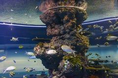 Peixes marinhos Imagens de Stock