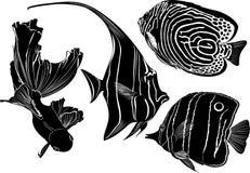 Peixes marinhos do aquário Fotografia de Stock