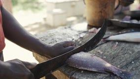 Peixes massacrando do cozinheiro chefe no bloco de desbastamento o fisher está cortando os peixes O modo de vida tradicional em Á filme