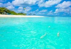 Peixes muito perto à praia Imagem de Stock Royalty Free