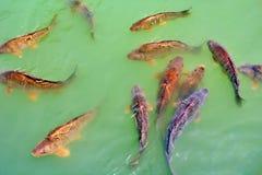 Peixes na água imagens de stock