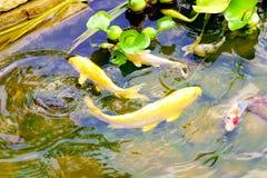 Peixes na água Imagem de Stock Royalty Free