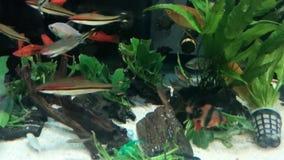 Peixes na água video estoque