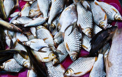 Peixes na cesta imagens de stock
