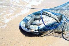 Peixes na grade Foto de Stock Royalty Free