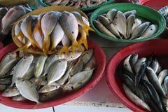 Peixes na loja do mercado Fotografia de Stock