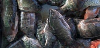 Peixes na tenda dos peixes fotos de stock