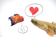 Peixes no amor Imagem de Stock Royalty Free