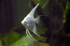 Peixes no aquário imagens de stock