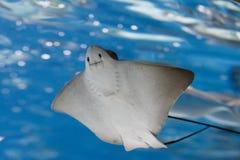 Peixes no aquário Foto de Stock Royalty Free