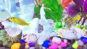 Peixes no aquário colorido no underwater vídeos de arquivo