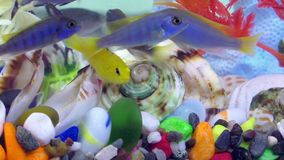 Peixes no aquário colorido no underwater filme