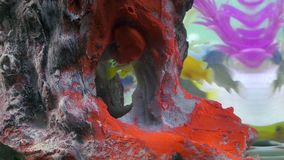 Peixes no aquário colorido no underwater video estoque