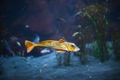 Peixes no aquário com iluminação fotos de stock royalty free