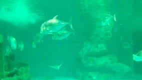 Peixes no aquário em Bangsaen, Chonburi, Tailândia video estoque