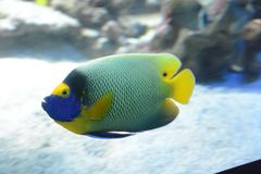 Peixes no aquário em França Fotos de Stock Royalty Free