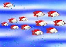 Peixes no azul Fotos de Stock Royalty Free