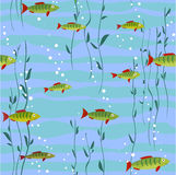 Peixes no fundo da água Foto de Stock