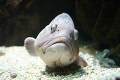 Peixes no fundo do mar Imagens de Stock