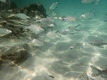 Peixes no fundo do mar arenoso Foto de Stock Royalty Free