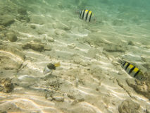 Peixes no fundo do mar arenoso Foto de Stock
